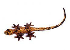Pískové zvířátko ještěrka TD0003-002